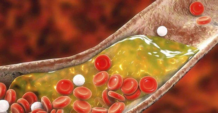 আপনার স্বাস্থ্য: যে ৮ খাবারে নিয়ন্ত্রণে থাকবে কোলেস্টেরল